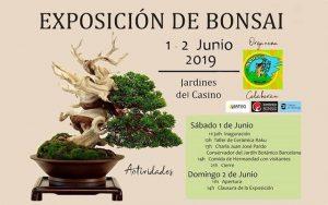 Exposición de Bonsai @ Casino de Novelda